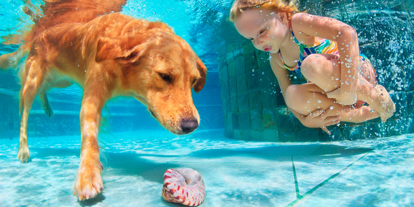 Pool Safety For Dogs The Top Seven
